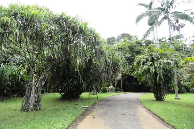 Sri Lanka, Kandy, Royal Botanical Garden